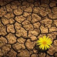 Emozioni in Mente: accettazione, adattamento o resilienza?