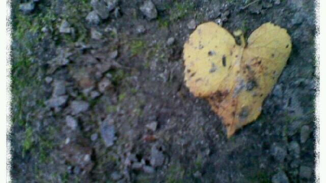 cuore_n