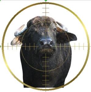 bufala-immagine